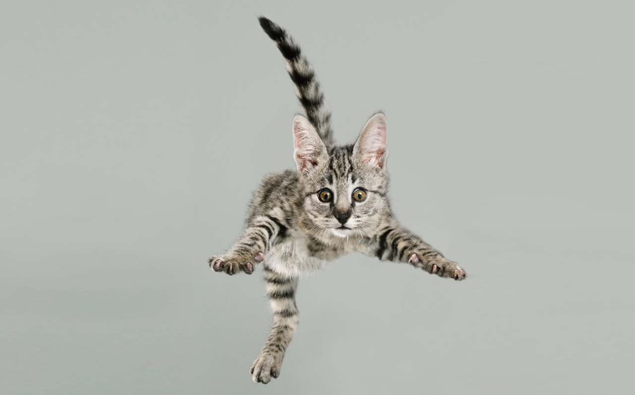 flying cats fliegende katzen